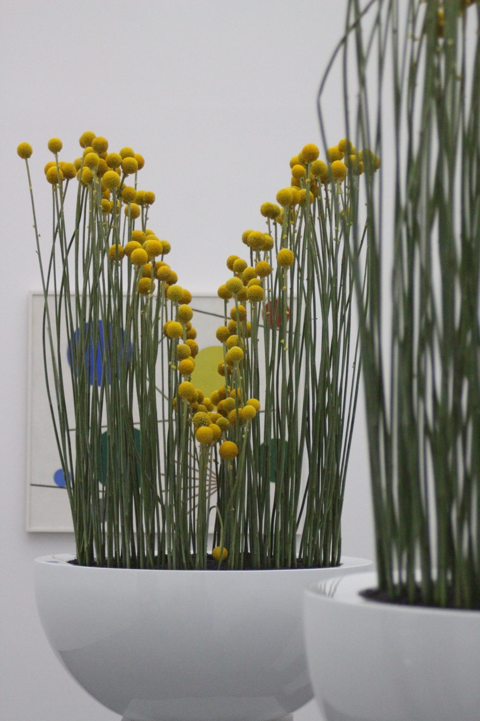Ausstellung Aargauer Kunsthaus Blumen Fur Die Kunst Walter Zellweger