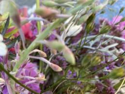 schönes Blumendetail lila