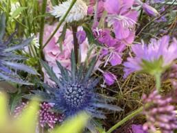 Blumendetail mit Distel und Scabiosa