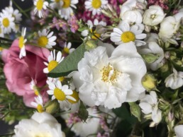 Detail weisse Rose und Kamille