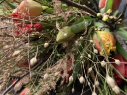 Tulpen mit Trockendetail