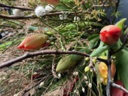 Zieräste, Tulpen und Heidekraut