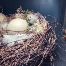 Nest mit Federn