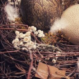 Blütendetail im Nest