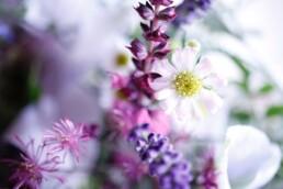 wunderbare Komposition Lavendel, Salbei und Aster