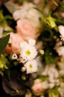 Blumendetail Aster