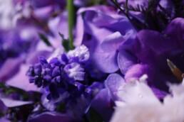 Blaue Salvia mit Hortensie