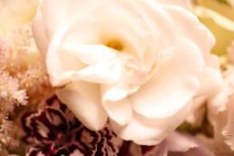 verwunschene Rose