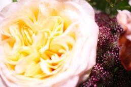 herrliche Rose im Detail